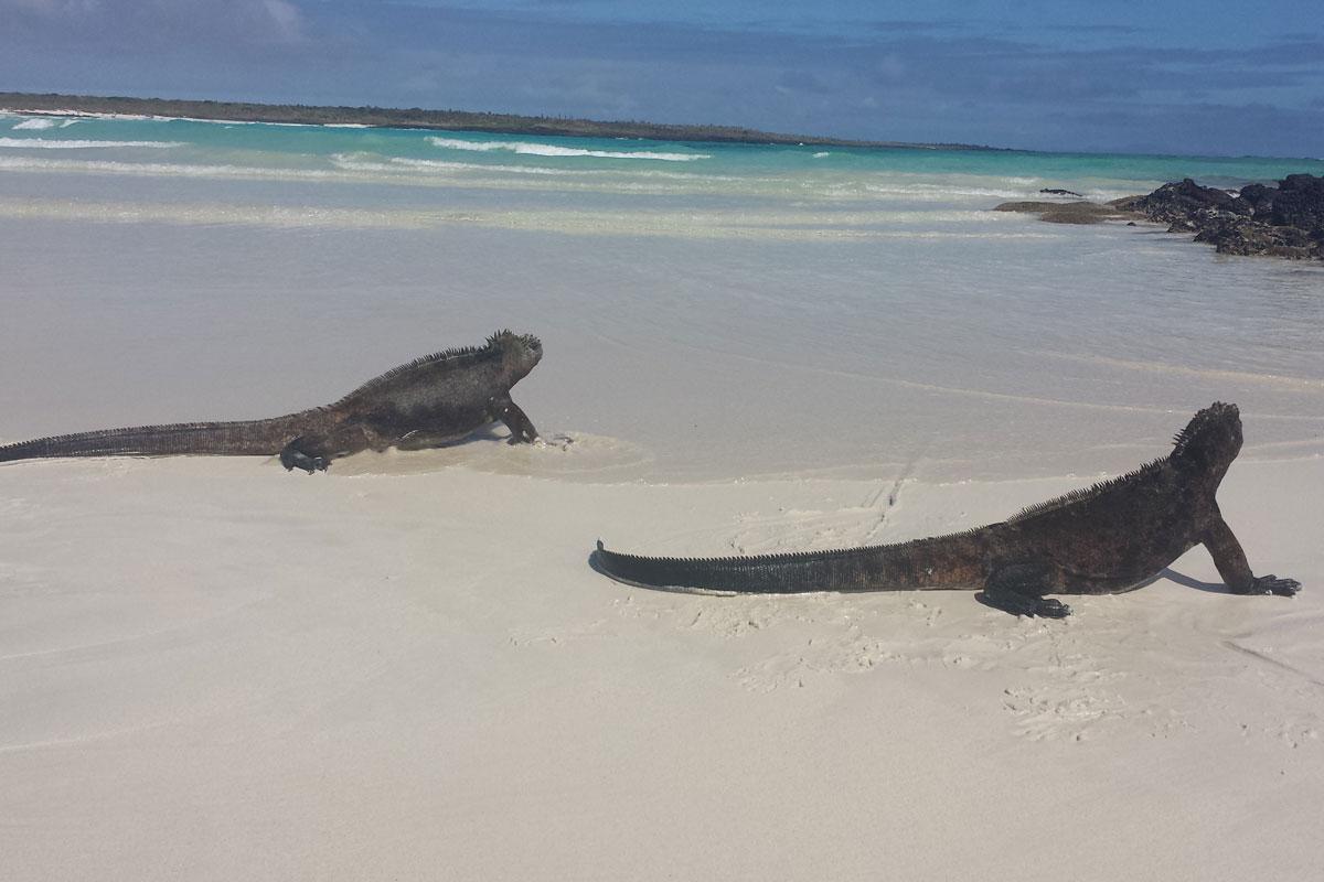 plage tortuga bay santa cruz