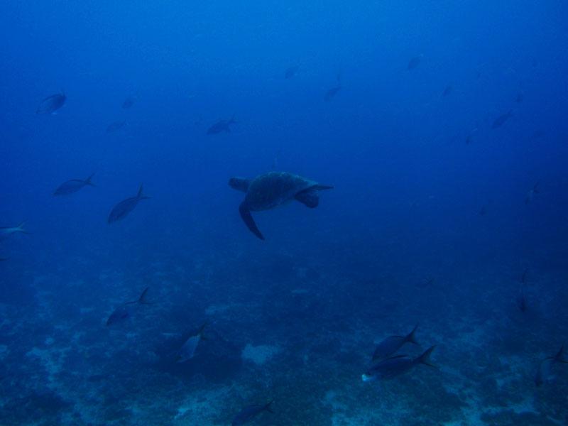 kicker rock picture la peregrina galápagos