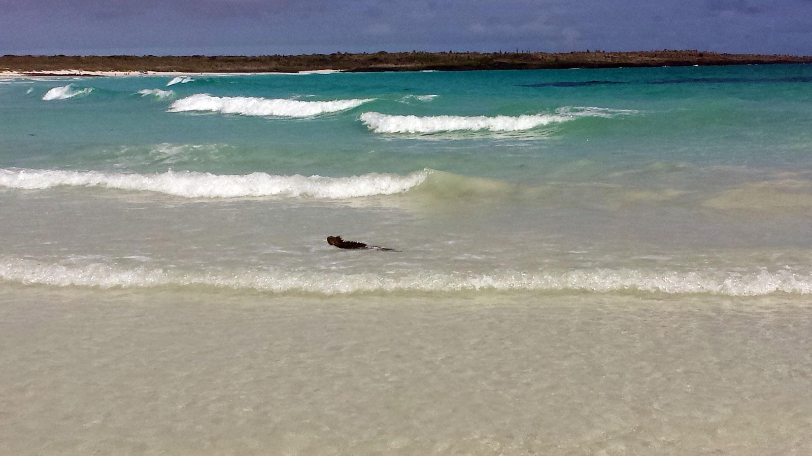 turtle bay picture la peregrina galápagos