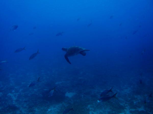 Sea Turtle encounter in scuba diving session